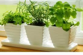 plantas aromaticas en casa