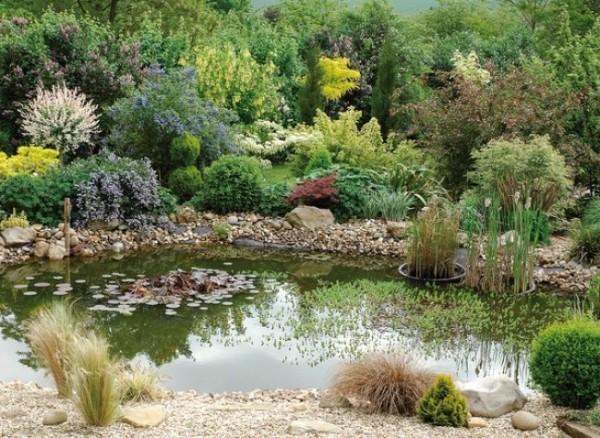 estanque-saludable-en-verano-01-e1376933880738