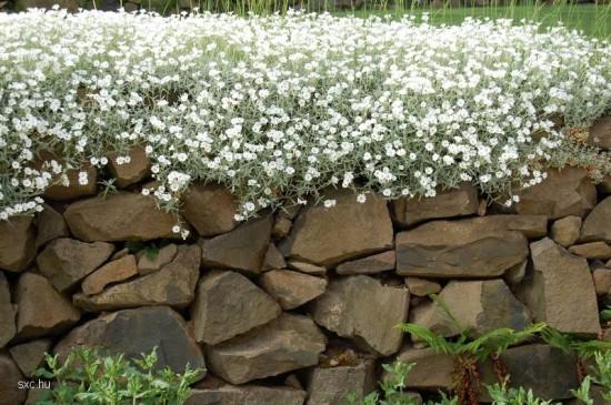 cercoantero-jardin