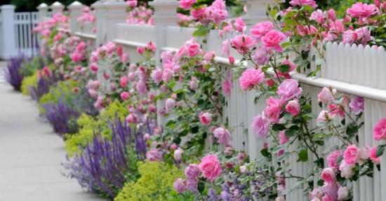 cercoence_flowers_estate_footway