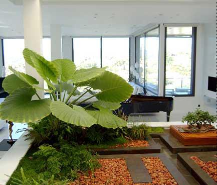 jardines interiores1
