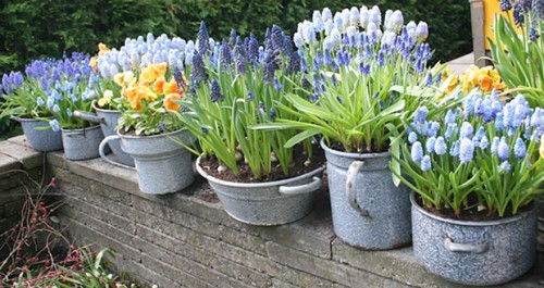 macetascomo-forzar-el-crecimiento-de-los-bulbos-de-primavera-1