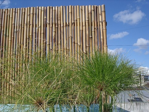 cercos-de-bambu-pergolas-y-cerramientos_ca6d3fd_3