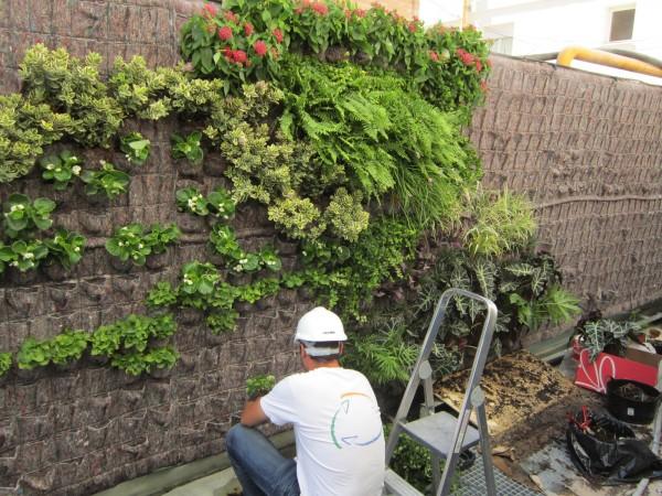 vertical_garden_installation_Terapia_Urbana_sin_logo