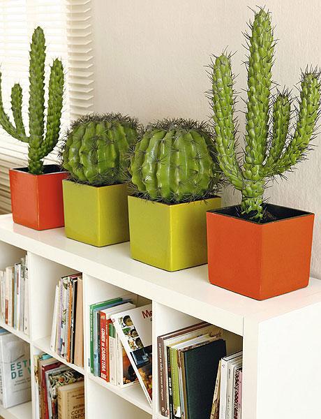 cactusenlinea
