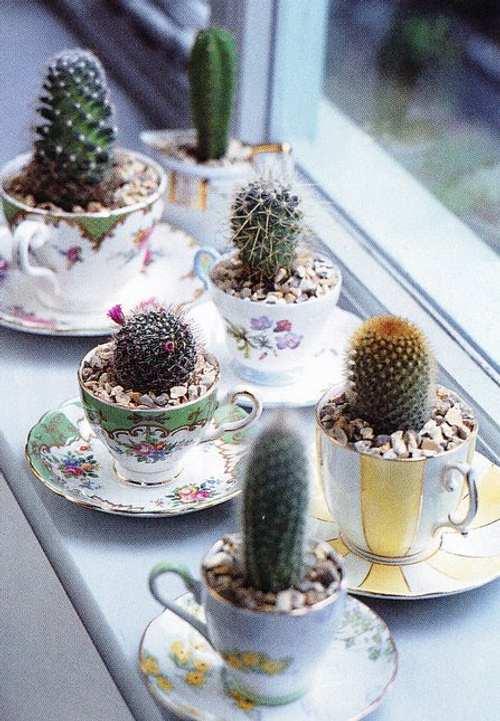 decorando-cactus-porcelana