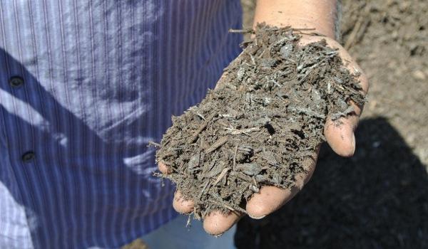 Ken-Singh-Holding-Compost