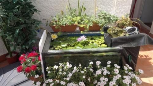 estanque20120815236custom
