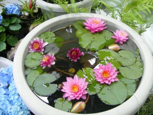 estanquedecogustora_decoracion_con_agua2
