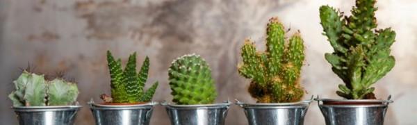 listado-jardineria-cactus-668x200x80