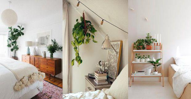 es-malo-dormir-con-plantas-en-la-habitacion-guide